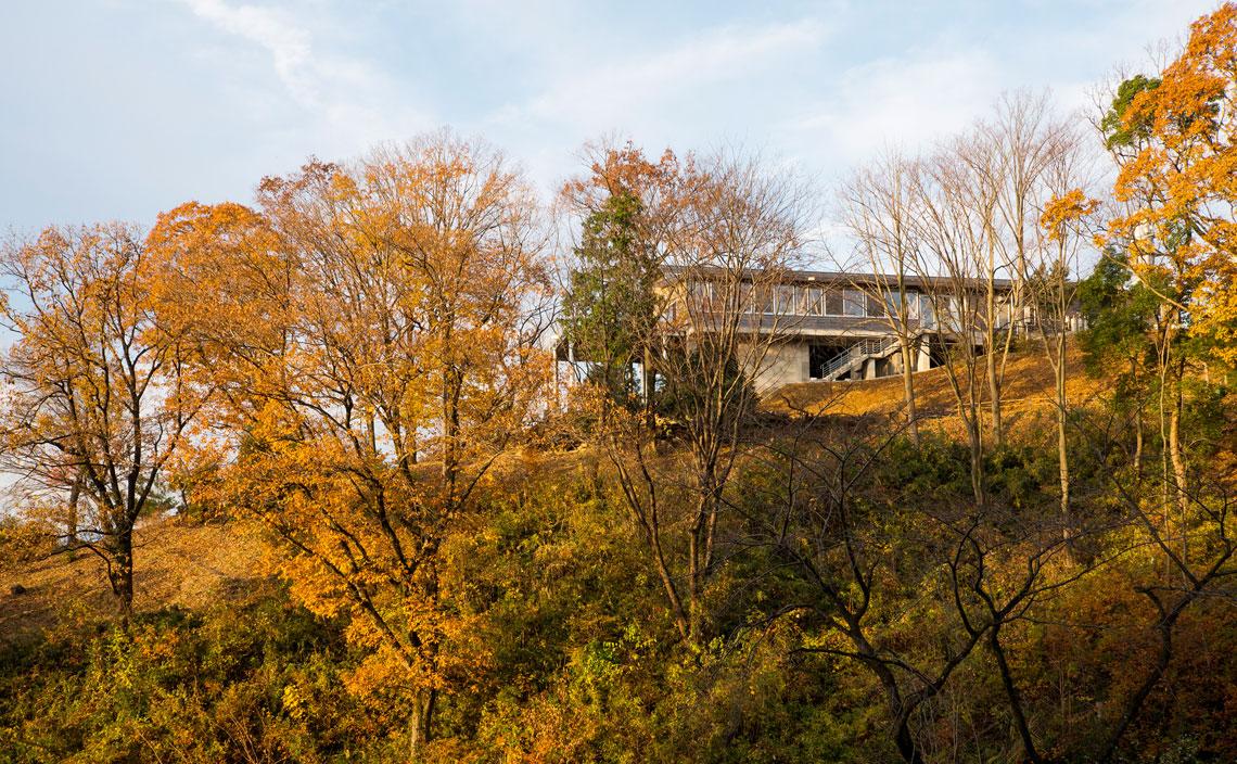 セミナーハウス敷地内の尾根に完成した食堂棟。周囲の樹々に包まれるようなロケーションは見事。