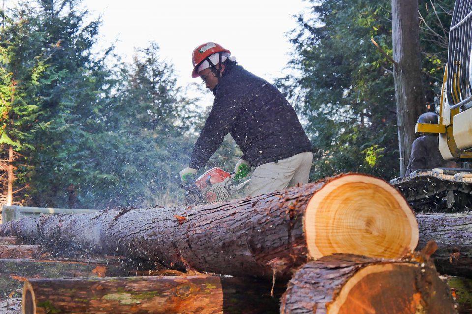 林業分野を担う若者たち