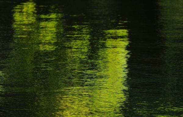 水の葉設計社